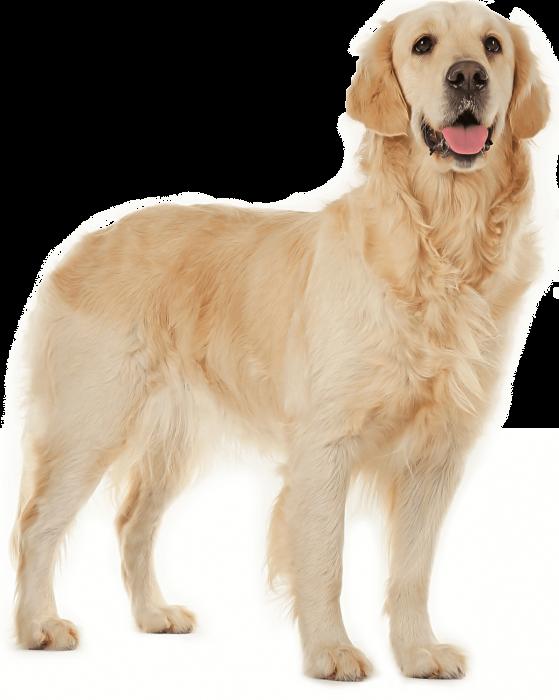 product_dog